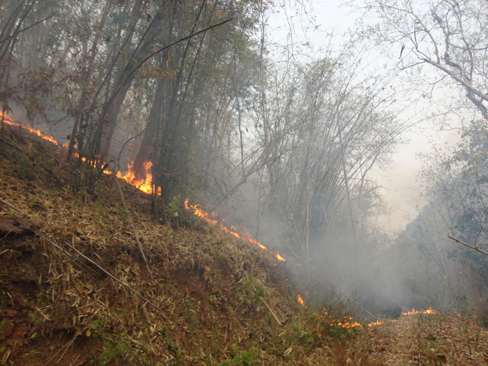 Photo of Taungoo Township villagers scared of forced labor orders and forest fires lit by Burma Army