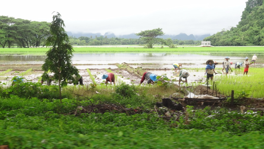 Photo of Villagers' farmlands and graveyard confiscated by government