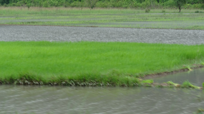 Photo of Heavy flooding destroys 9,500 acres of rice in eastern Burma
