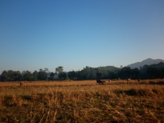 Photo of Rice Farmers Hit By 40% Crop Lost