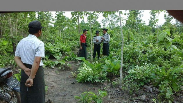 Photo of BGF arrests tree planters in Mon State's Dar Li forest reserve